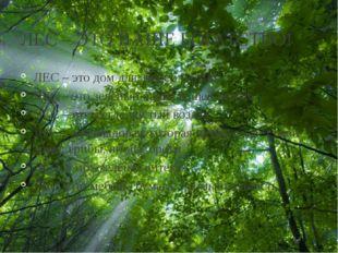 ЛЕС – ЭТО НАШЕ БОГАТСТВО! ЛЕС – это дом для зверей и птиц ЛЕС – это зелёный н