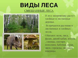 СМЕШАННЫЕ ЛЕСА ВИДЫ ЛЕСА В лесу вперемешку растут хвойные и лиственные дерев