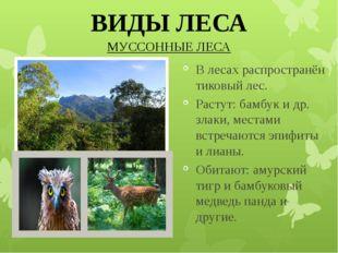 МУССОННЫЕ ЛЕСА ВИДЫ ЛЕСА В лесах распространён тиковый лес. Растут: бамбук и