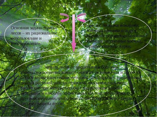 ОХРАНА ЛЕСА Основная задача охраны лесов – их рациональное использование и в...