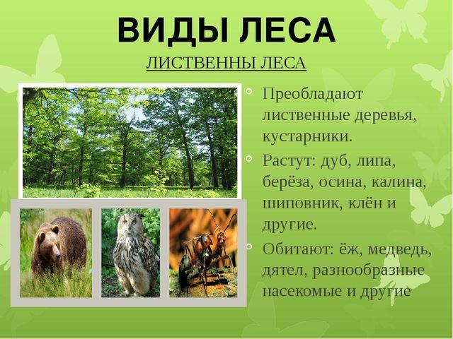 ЛИСТВЕННЫ ЛЕСА Преобладают лиственные деревья, кустарники. Растут: дуб, липа...