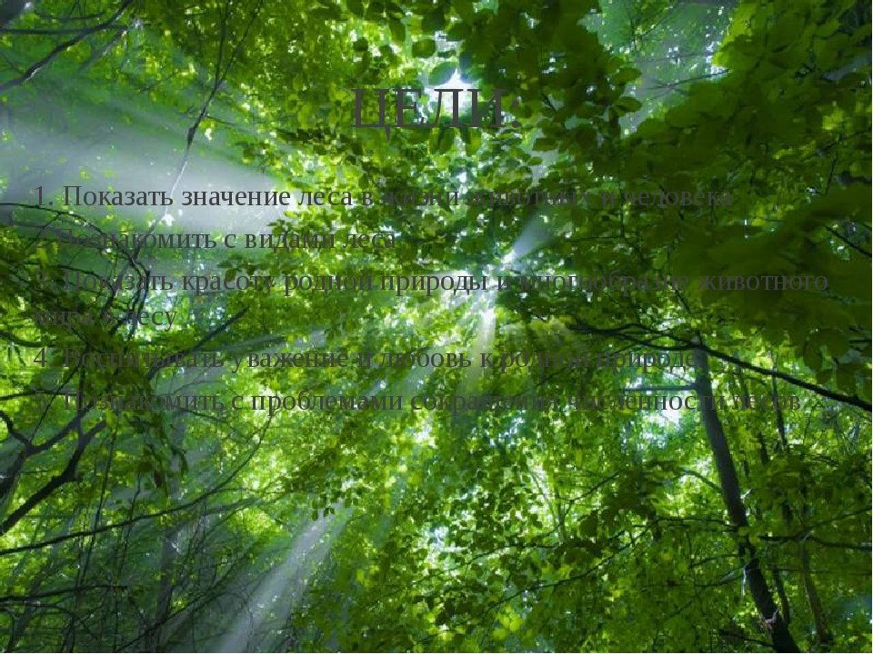 ЦЕЛИ: 1. Показать значение леса в жизни животных и человека 2.Познакомить с в...