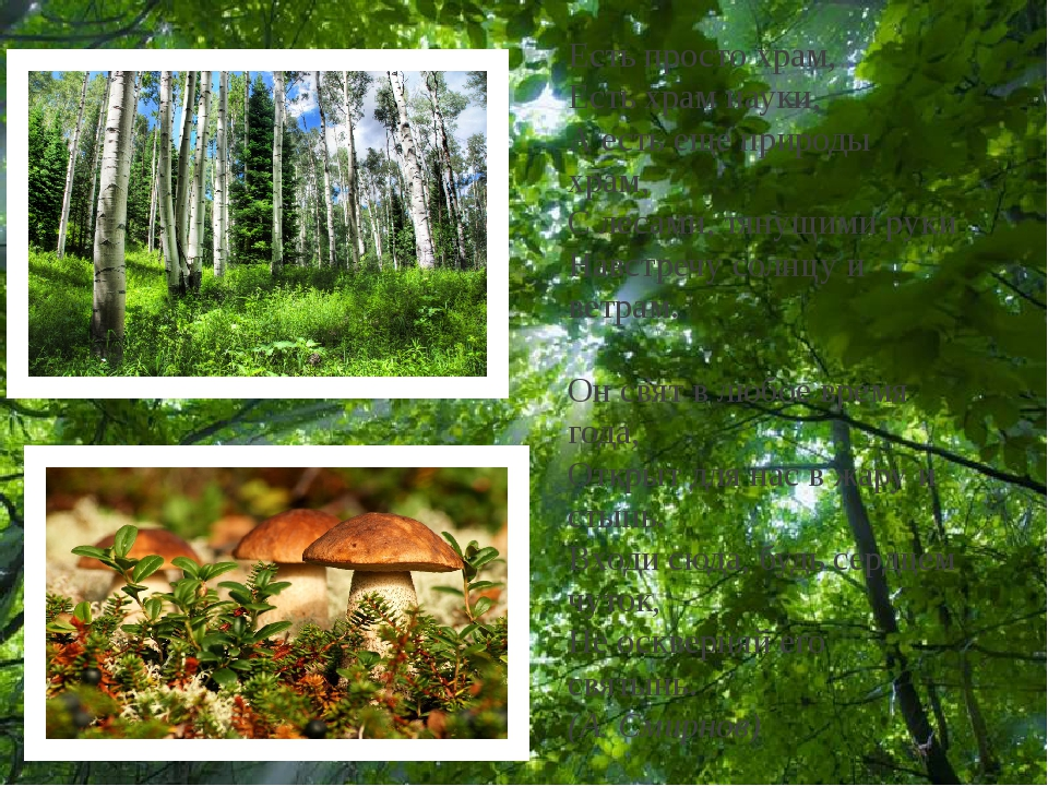 Есть просто храм, Есть храм науки, А есть еще природы храм, С лесами, тянущи...