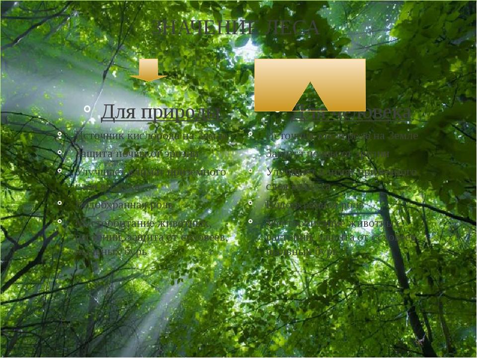 ЗНАЧЕНИЕ ЛЕСА Для природы Источник кислорода на Земле Защита почвы от эрозии...