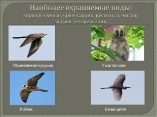 Обыкновенная кукушка Ушастая сова Кобчик Белая цапля