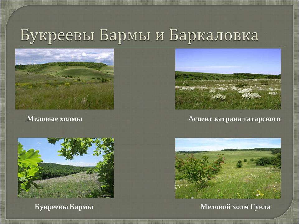 Меловой холм Гукла Букреевы Бармы Аспект катрана татарского Меловые холмы