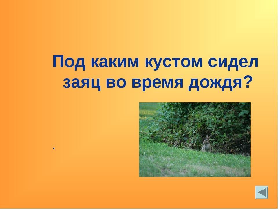 Под каким кустом сидел заяц во время дождя? .