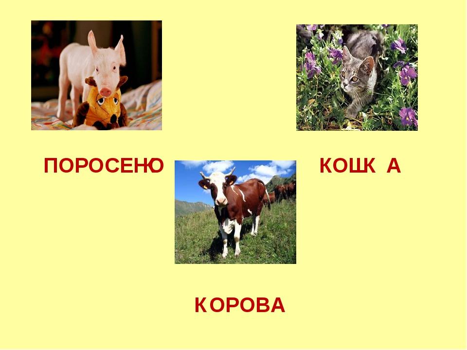 ПОРОСЕНО ОШ А ОРОВА К К К К