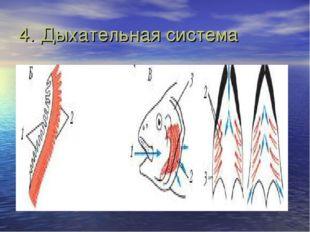 4. Дыхательная система