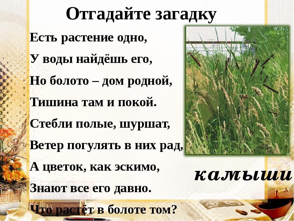 Отгадайте загадку Есть растение одно, У воды найдёшь его, Но болото – дом ро...