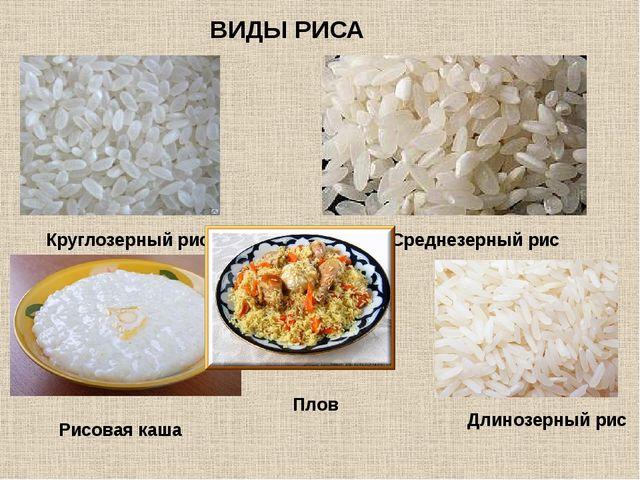 Круглозерный рис Среднезерный рис Длинозерный рис ВИДЫ РИСА Рисовая каша Плов