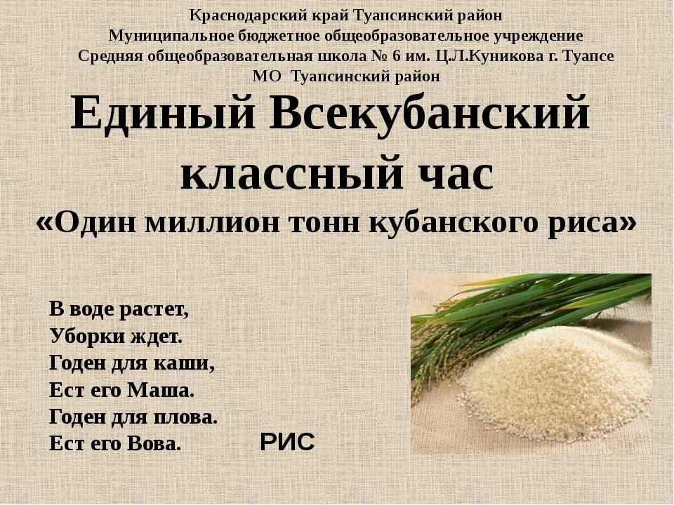 Единый Всекубанский классный час «Один миллион тонн кубанского риса» В воде р...