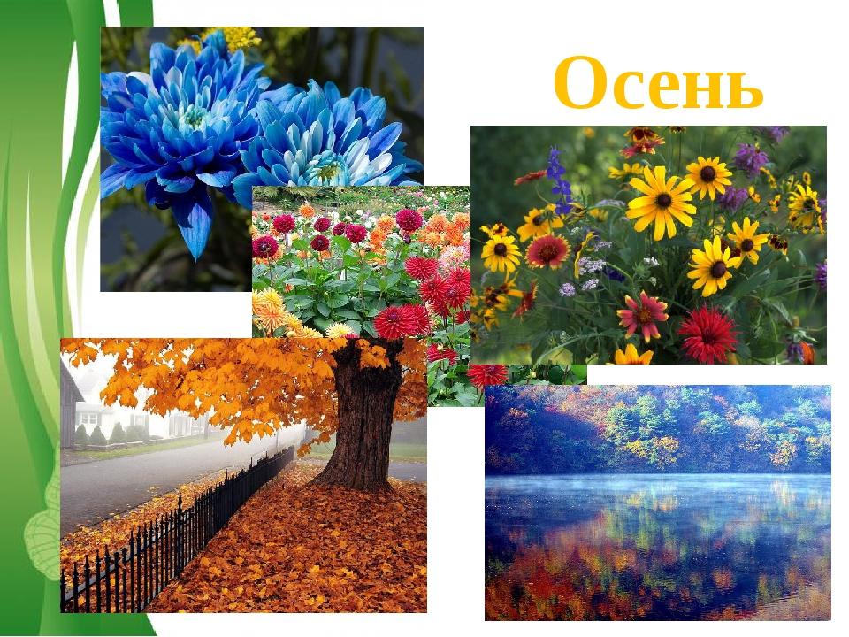 Осень Free Powerpoint Templates Page *