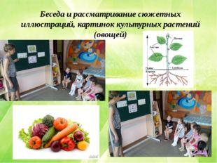 Беседа и рассматривание сюжетных иллюстраций, картинок культурных растений (