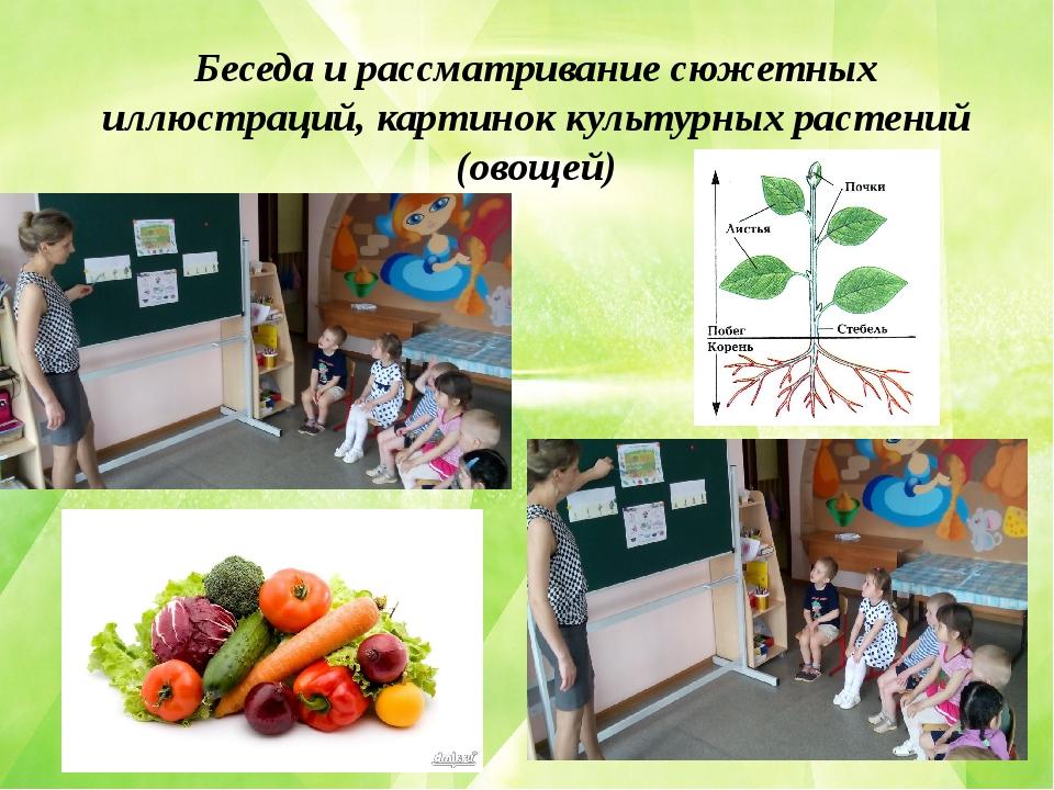 Беседа и рассматривание сюжетных иллюстраций, картинок культурных растений (...