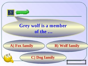 C) Dog family B) Wolf family A) Fox family 50 Grey wolf is a member of the …