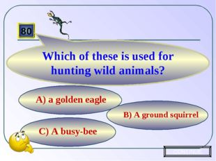 C) A busy-bee B) A ground squirrel А) a golden eagle 80 Which of these is use