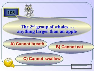 C) Cannot swallow B) Cannot eat А) Cannot breath 105 The 2nd group of whales