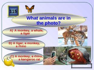 C) A monkey, a rhino, a kangaroo rat B) A tiger, a monkey, a rhino A monkey,