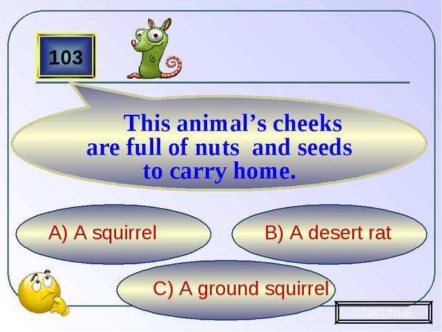 C) A ground squirrel B) A desert rat A) A squirrel 103 This animal's cheeks a...