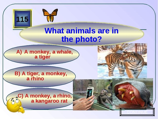 C) A monkey, a rhino, a kangaroo rat B) A tiger, a monkey, a rhino A monkey,...