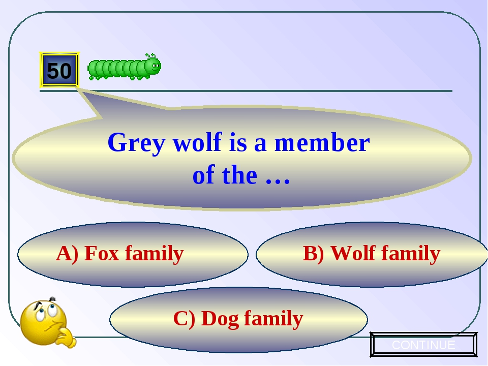 C) Dog family B) Wolf family A) Fox family 50 Grey wolf is a member of the …...