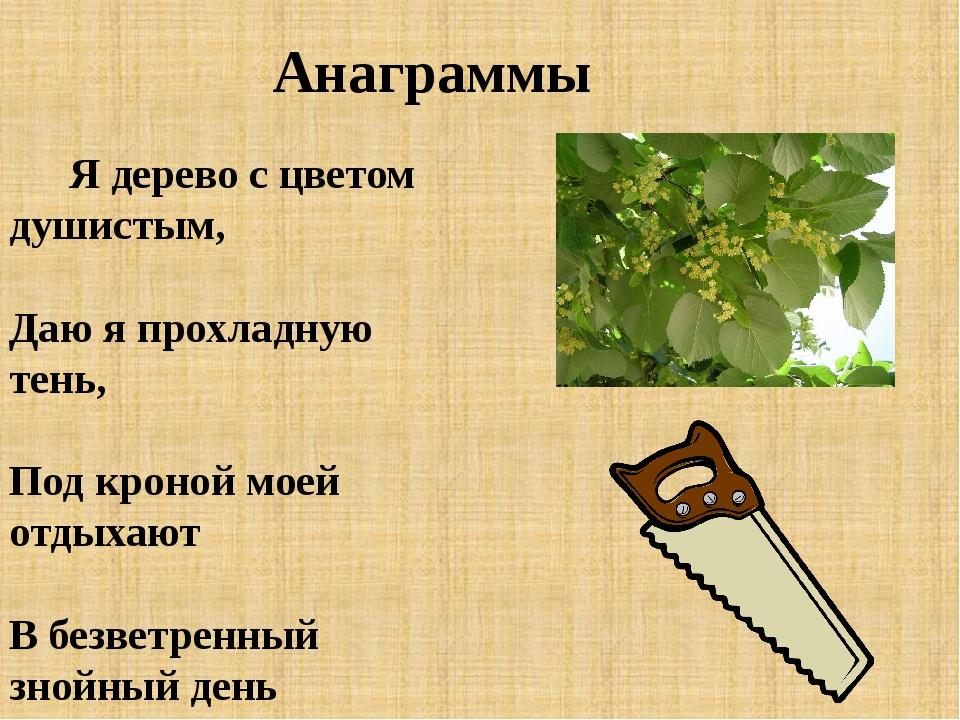 Анаграммы Я дерево с цветом душистым, Даю я прохладную тень, Под кроной моей...