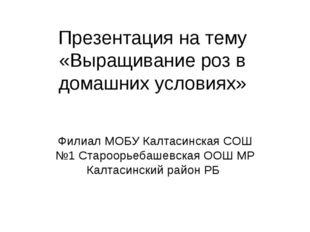 Презентация на тему «Выращивание роз в домашних условиях» Филиал МОБУ Калтаси