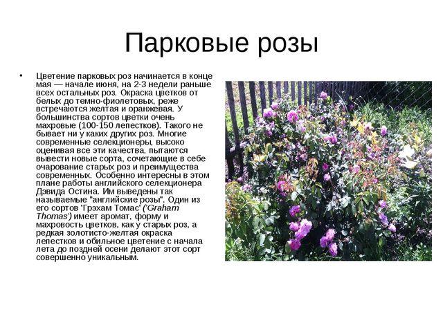 Парковые розы Цветение парковых роз начинается в конце мая — начале июня, на...