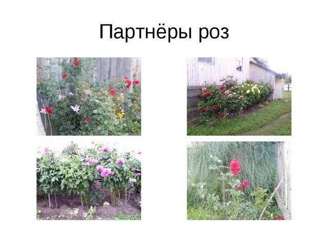 Партнёры роз