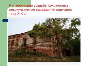 На территории усадьбы сохранились лесокультурные насаждения паркового типа XI