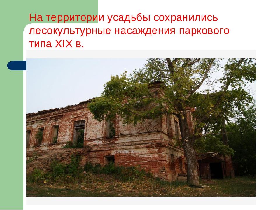 На территории усадьбы сохранились лесокультурные насаждения паркового типа XI...