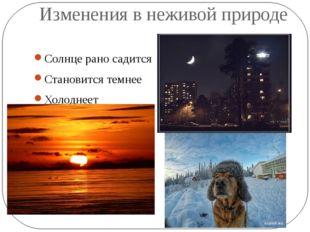 Изменения в неживой природе Солнце рано садится Становится темнее Холоднеет