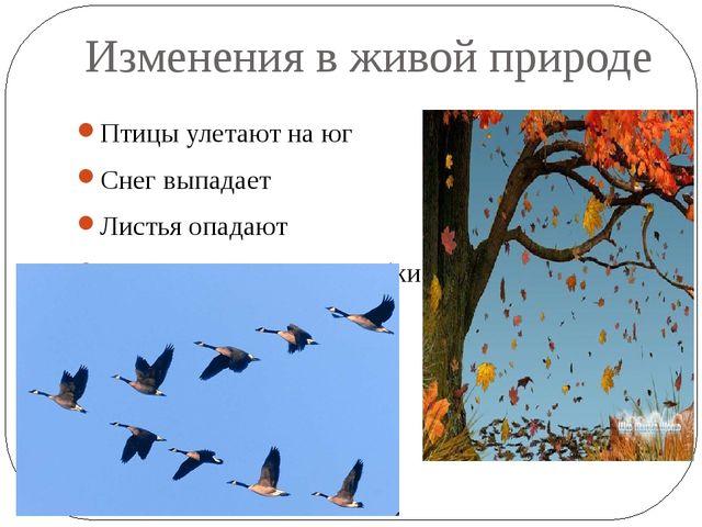 Изменения в живой природе Птицы улетают на юг Снег выпадает Листья опадают Жи...