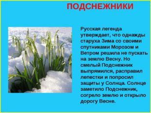 ПОДСНЕЖНИКИ Русская легенда утверждает, что однажды старуха Зима со своими с