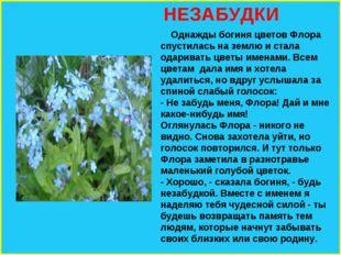 НЕЗАБУДКИ Однажды богиня цветов Флора спустилась на землю и стала одаривать