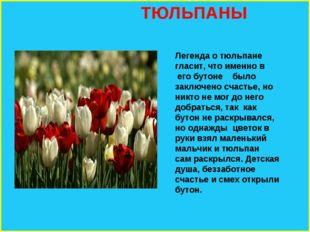 ТЮЛЬПАНЫ Легенда о тюльпане гласит, что именно в его бутоне было заключено с