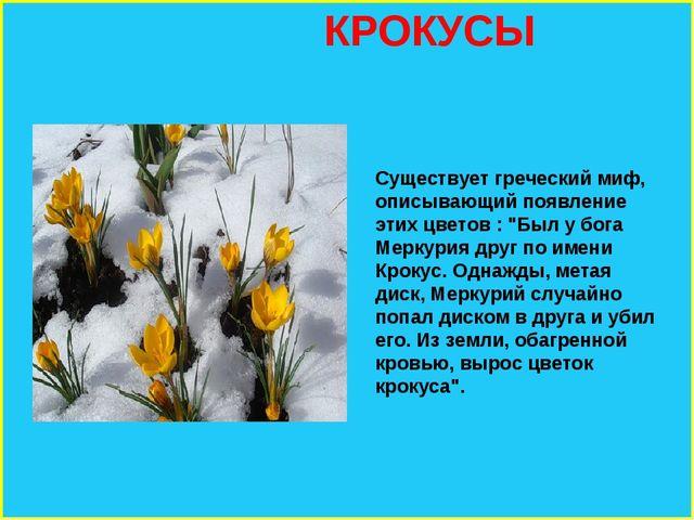 """КРОКУСЫ Существует греческий миф, описывающий появление этих цветов : """"Был у..."""