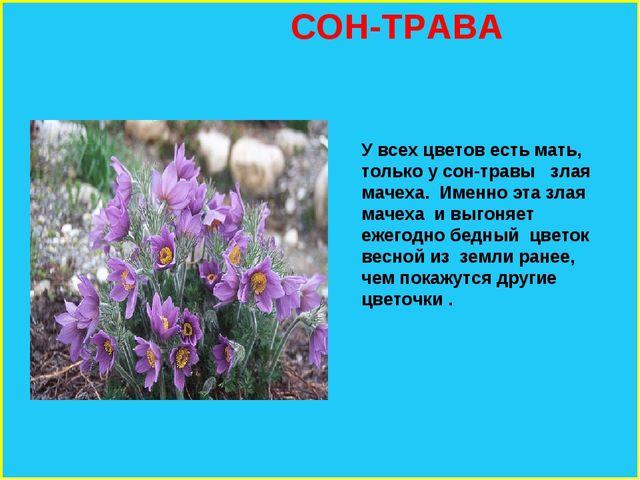 СОН-ТРАВА У всех цветов есть мать, только у сон-травы злая мачеха. Именно эт...