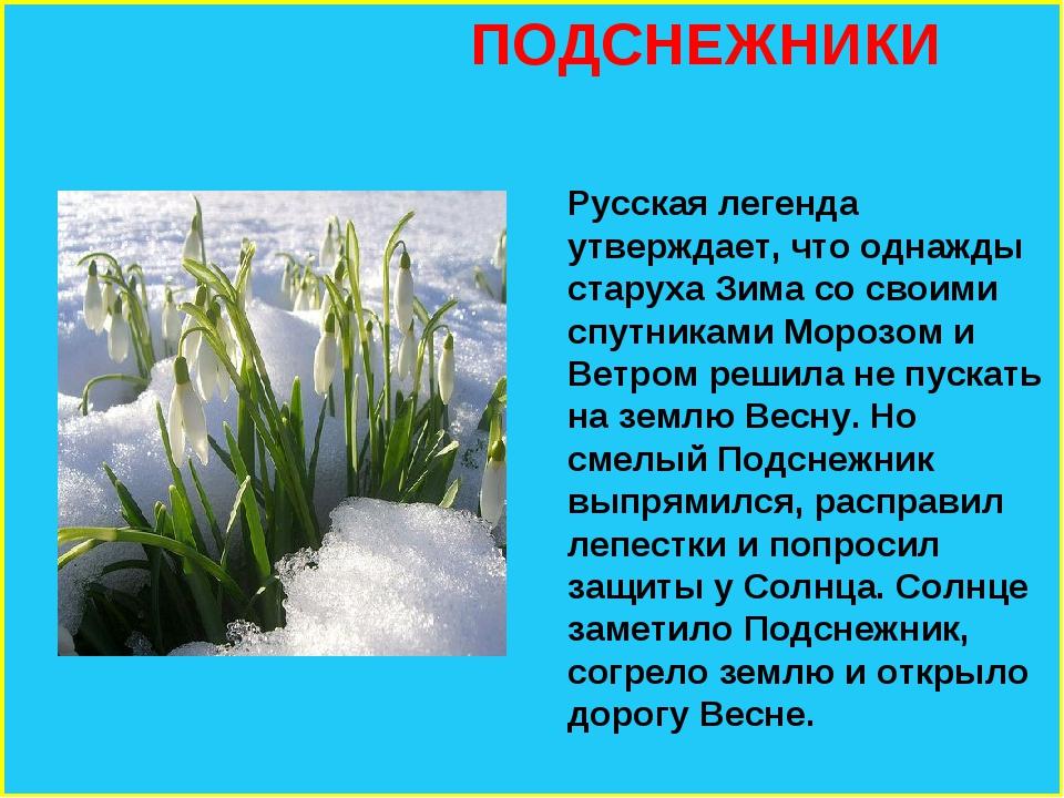 ПОДСНЕЖНИКИ Русская легенда утверждает, что однажды старуха Зима со своими с...