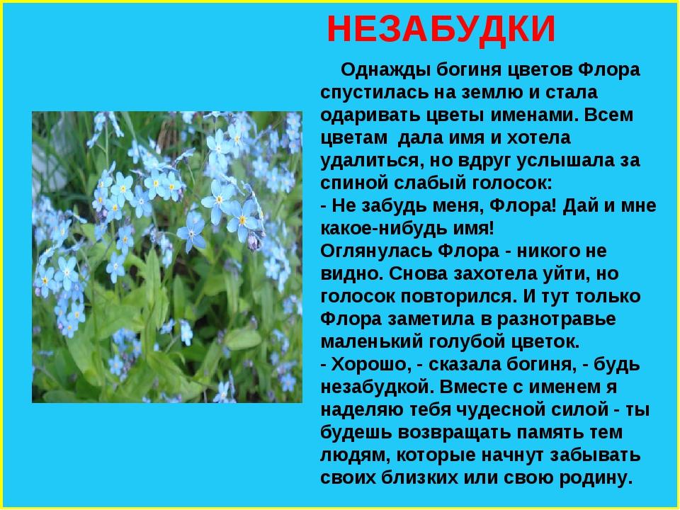 НЕЗАБУДКИ Однажды богиня цветов Флора спустилась на землю и стала одаривать...