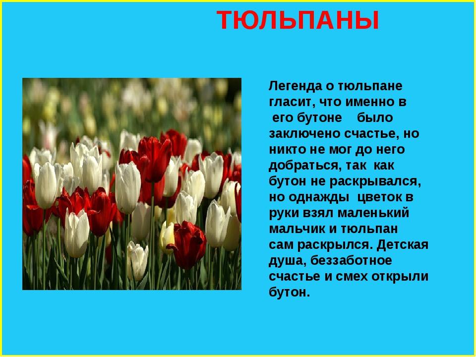 ТЮЛЬПАНЫ Легенда о тюльпане гласит, что именно в его бутоне было заключено с...