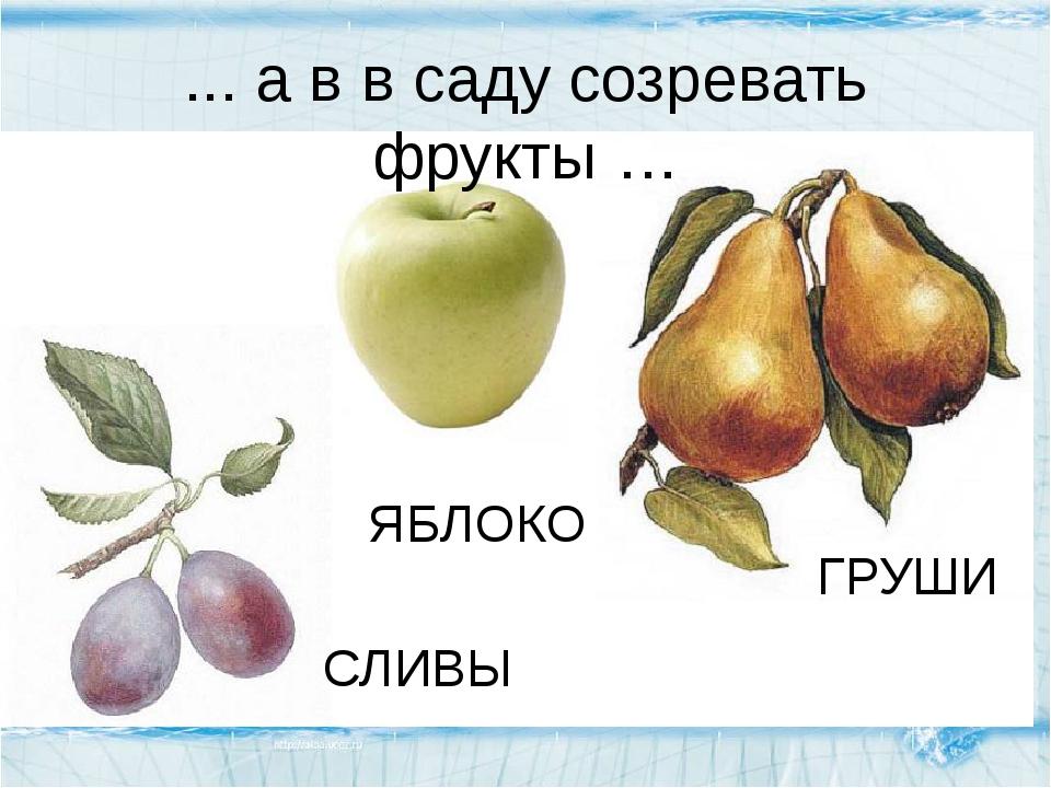 ... а в в саду созревать фрукты … ГРУШИ СЛИВЫ ЯБЛОКО