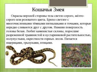 Кошачья Змея Окраска верхней стороны тела светло-серого, жёлто-серого или роз