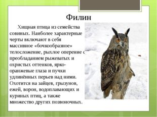 Филин Хищная птица из семейства совиных. Наиболее характерные черты включают