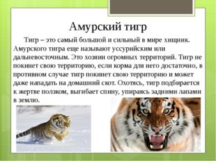 Амурский тигр Тигр – это самый большой и сильный в мире хищник. Амурского тиг
