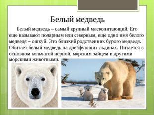 Белый медведь Белый медведь – самый крупный млекопитающий. Его еще называют п