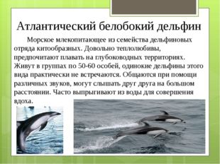 Атлантический белобокий дельфин Морское млекопитающее из семейства дельфиновы