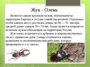 Жук - Олень Является самым крупным жуком, обитающим на территории Европы в со