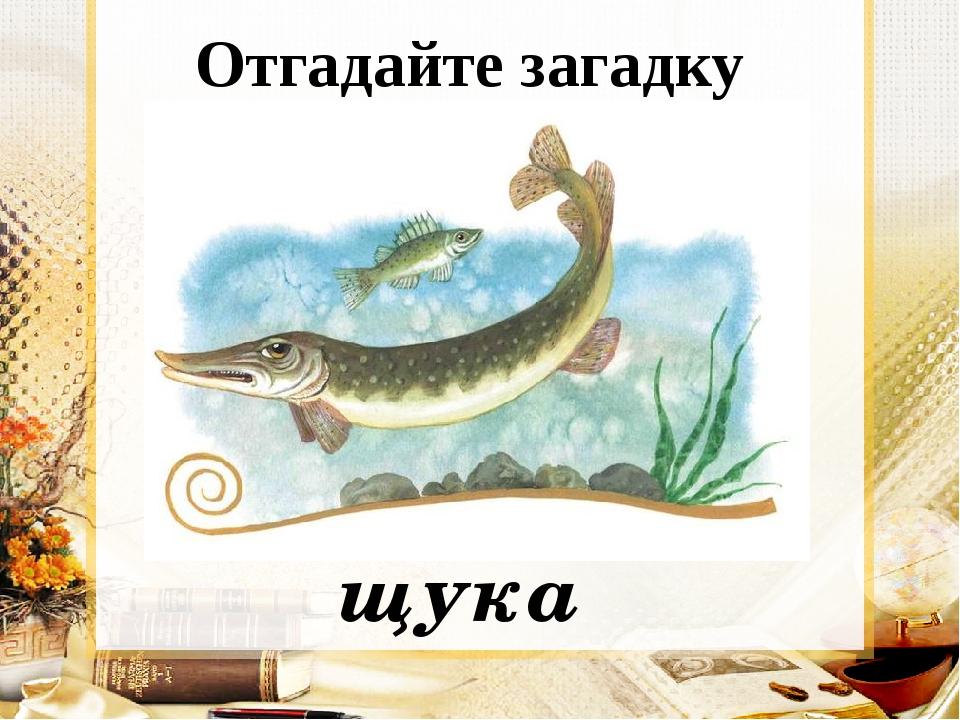 Отгадайте загадку Опасней всех она в реке, Хитра, прожорлива, сильна, Притом...